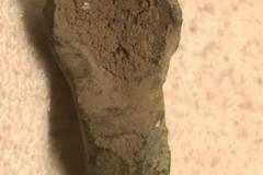 Kort likearmet Fibula